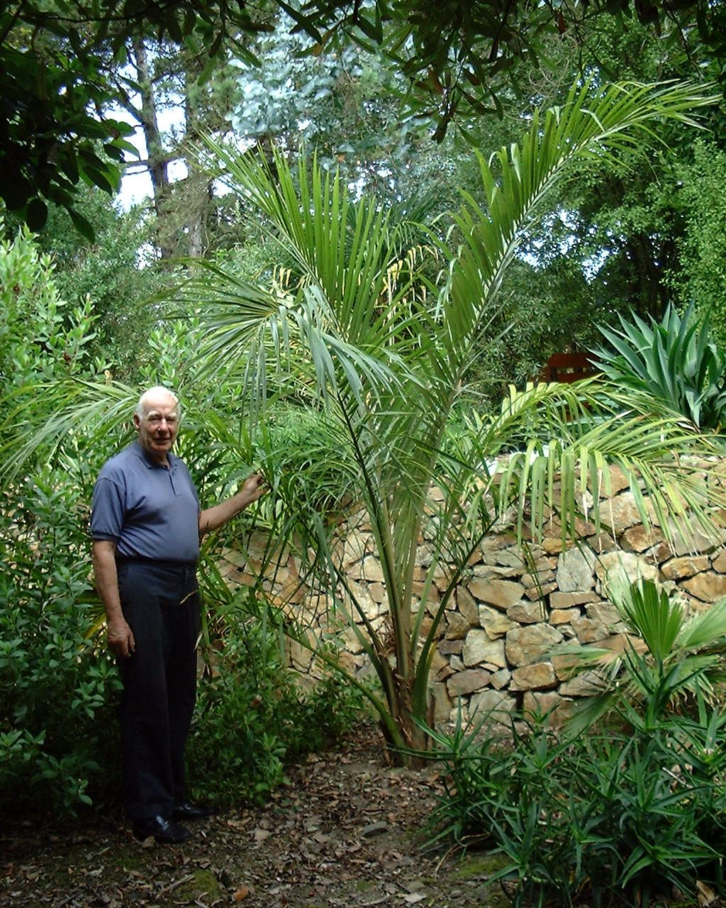David Robinson in his garden with Juania australis